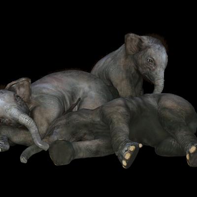 elephant_skin
